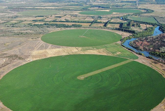 001-alfalfa-de-la-patagonia-nafosa